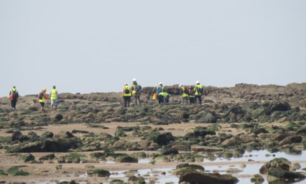 Beach Cleaning Support for Strandliners